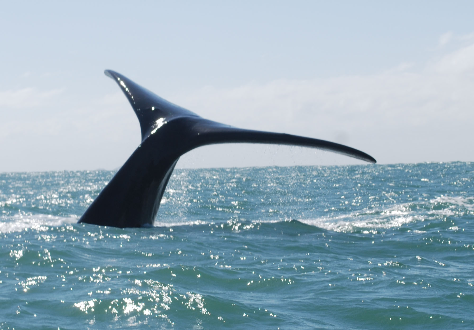 baleia-9